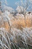 Vintern landskap Arkivfoto