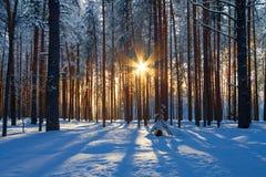 Vintern landskap arkivbilder