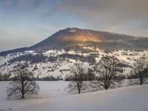 Vintern landskap med trees Arkivbilder