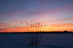 Vintern landskap. Sammansättning av naturen royaltyfri fotografi