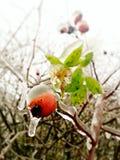 Vintern och is är kommande Arkivbilder