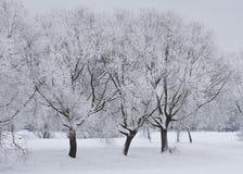 Vintern parkerar Arkivbilder