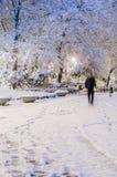 Vintern parkerar royaltyfri fotografi