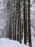 Vintern parkerar gränden av sörjer Royaltyfri Bild