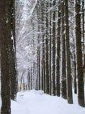 Vintern parkerar gränden av sörjer Arkivfoto