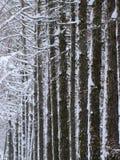 Vintern parkerar gränden av sörjer Fotografering för Bildbyråer