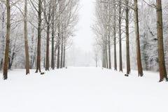 Vintern parkerar gränden med snö royaltyfri bild