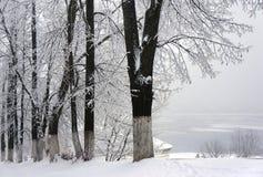 Vintern parkerar, landskap royaltyfri foto