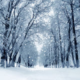 Vintern parkerar, landskap royaltyfria bilder