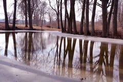 Vintern parkerar med det gamla träd och dammet med meltvatten Royaltyfri Bild