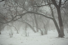 Vintern parkerar med krökta träd i dimma Royaltyfria Bilder