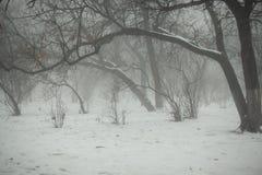 Vintern parkerar med krökta träd i dimma Royaltyfria Foton