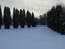 Vintern parkerar, snö och förkylning Avenyer av träd royaltyfri foto