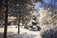 Vintern parkerar snö på snö-täckte vägen för trädjulgranar den buskar Arkivfoto