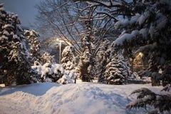 Vintern parkerar snö på snö-täckte vägen för trädjulgranar den buskar Royaltyfri Foto
