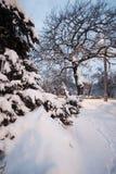 Vintern parkerar snö på snö-täckte vägen för trädjulgranar den buskar Arkivbilder