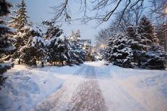 Vintern parkerar snö på snö-täckte vägen för trädjulgranar den buskar Royaltyfri Fotografi