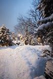 Vintern parkerar snö på snö-täckte vägen för trädjulgranar den buskar Royaltyfria Bilder