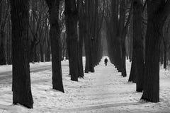 Vintern parkerar svartvitt Fotografering för Bildbyråer