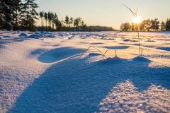 Vintern sätter in solnedgång med snö Fotografering för Bildbyråer