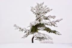 Vintern sörjer Arkivbild