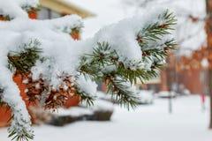 Vintern sörjer filialer Arkivbilder