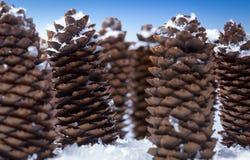 Vintern sörjer kottestilleben i snö Royaltyfri Foto