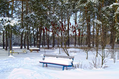 Vintern sörjer in parkerar Fotografering för Bildbyråer