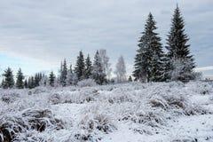 Vintern sörjer träd, julbegrepp royaltyfri foto