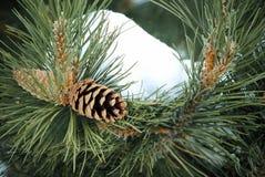 Vintern sörjer trädet Arkivbild