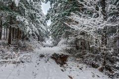 Vintern sörjer trädskogen Arkivbilder