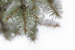 Vintern skissar bakgrund av granfilialer Royaltyfri Bild