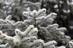 Vintern skissar bakgrund med granfilialer Royaltyfria Foton