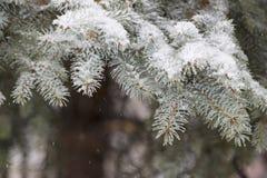 Vintern skissar bakgrund med granfilialer Fotografering för Bildbyråer