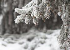 Vintern skissar bakgrund med granfilialer och fallande snö Royaltyfri Foto