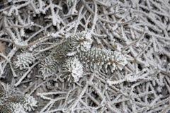 Vintern skissar bakgrund med granfilialer och fallande snö Arkivbild