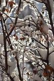 Vintern skurar borsten Arkivfoton