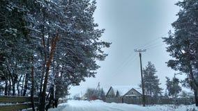 Vintern snö, sörjer, byn, förkylning, zmiev royaltyfri fotografi