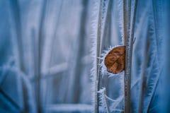 Vintern specificerar, den frostiga leafen Arkivfoto