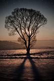 Vinternatt Royaltyfria Foton