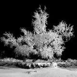 Vinternatt och frostigt träd royaltyfria foton