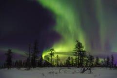 Vinternattlandskap med skogen, vägen och polart ljus över träden arkivfoto