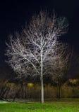 Vinternattträd royaltyfri fotografi