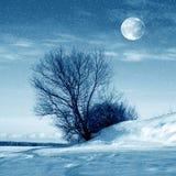 Vinternatur, måne och träd Fotografering för Bildbyråer