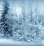 Vinternatur, skog Arkivfoto