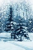 Vinternatur, skog Royaltyfri Bild
