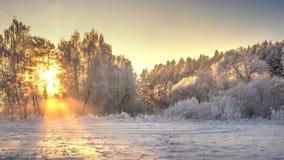 Vinternaturlandskap i ljus soluppgång Frostiga och snöig träd på flodkust i guld- livligt solljus royaltyfri foto