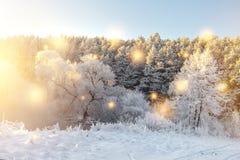 Vinternaturlandskap med glödande magiska ljus Glänsande snöflingor faller på snöig träd i morgonsolljus Jul arkivfoto