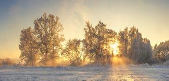 Vinternaturlandskap med varmt solljus i morgonen Frostig natur vita röda stjärnor för abstrakt för bakgrundsjul mörk för garnerin royaltyfri bild