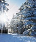 Vinterns saga Fotografering för Bildbyråer